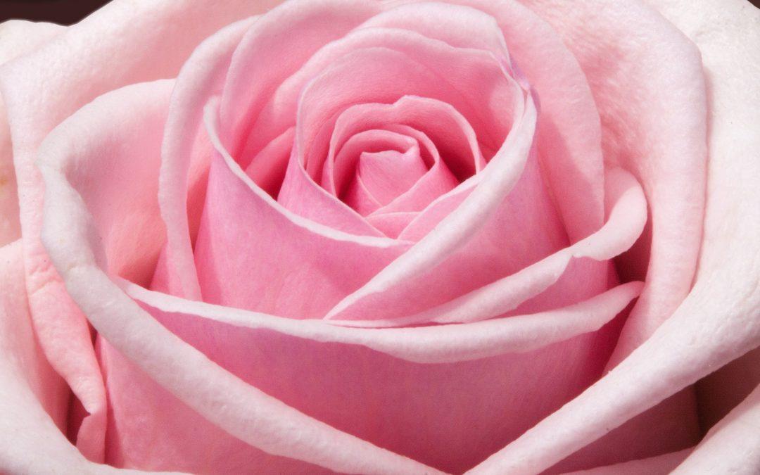 Beoordelingen van verschillende online bloemisten